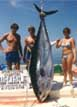Go Tuna Fishing!