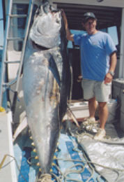 giant tuna catch