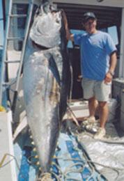 Tuna Fishing Charters | Enjoy Catching Tuna Fish Off The